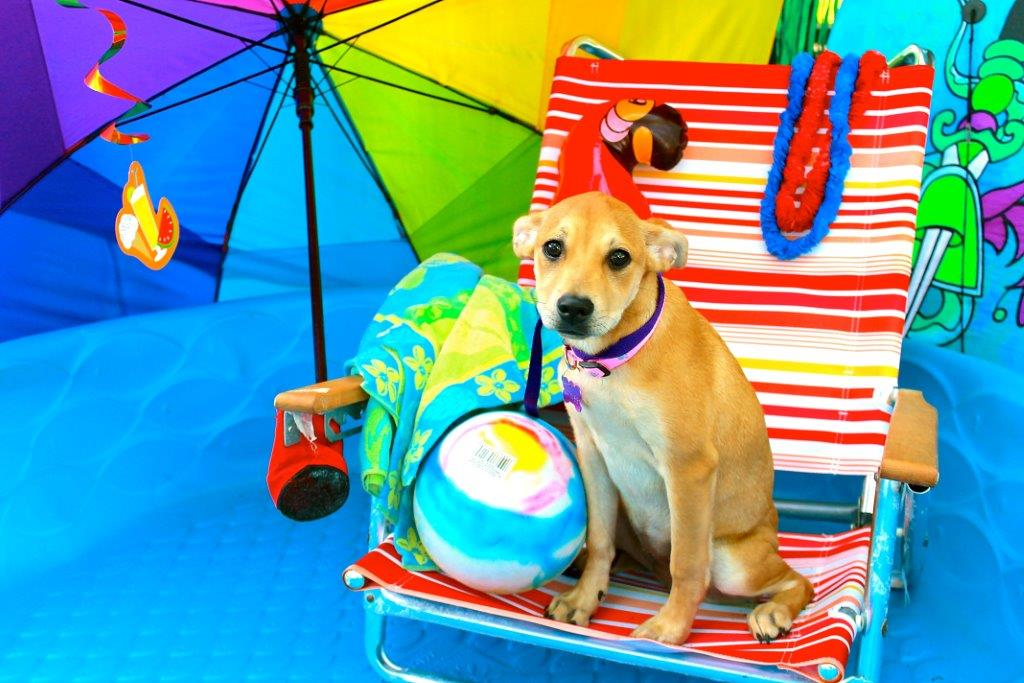 Photo of small dog posing among beach-themed props.